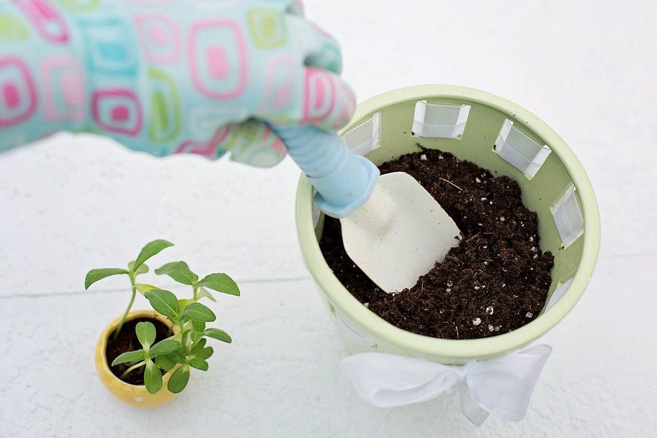 Flower pot planting