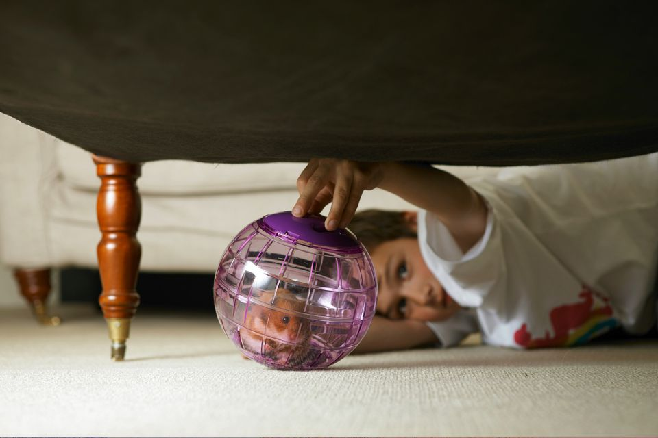 Boy playing with hamster in globe