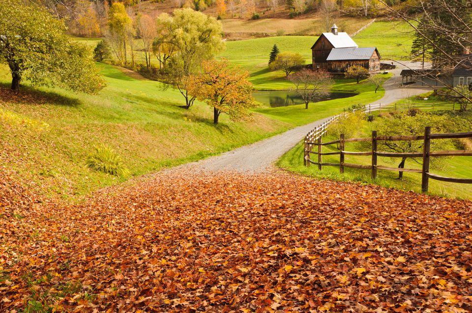 Down a Leafy Lane