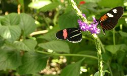 Inside the Butterfly Haven