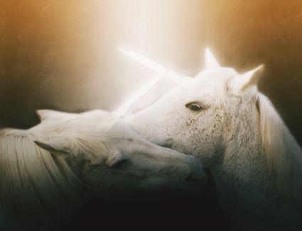 How to Treat Sunburn on Horses How to Treat Sunburn on Horses new images