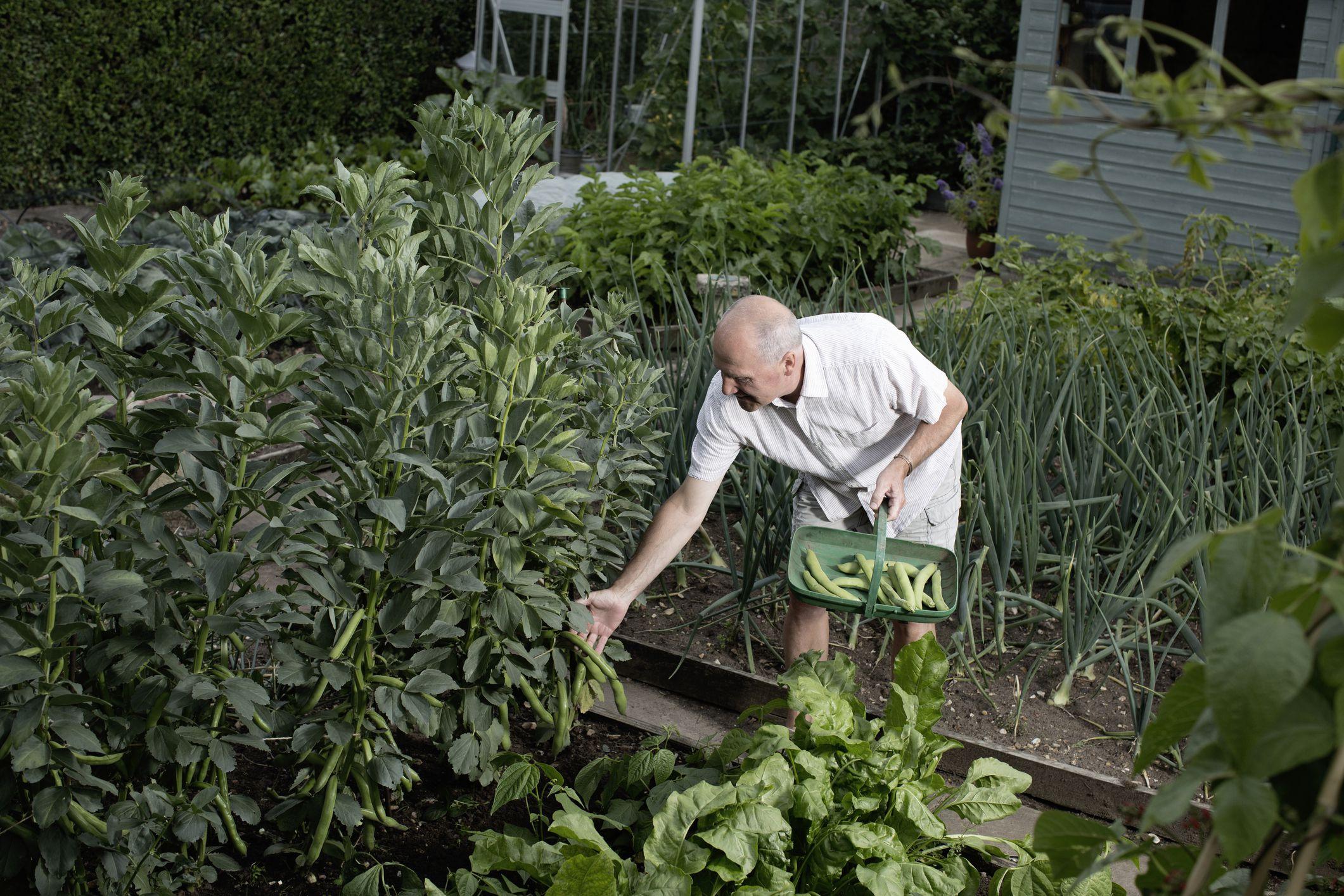 Grow Your Own 17 Plants for a Shade Veggie Garden