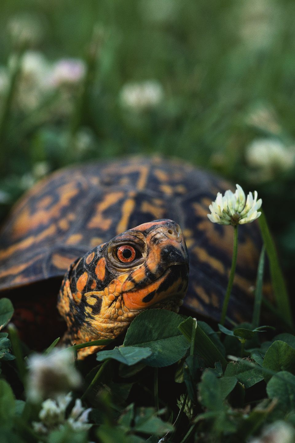 building outdoor housing for box turtles