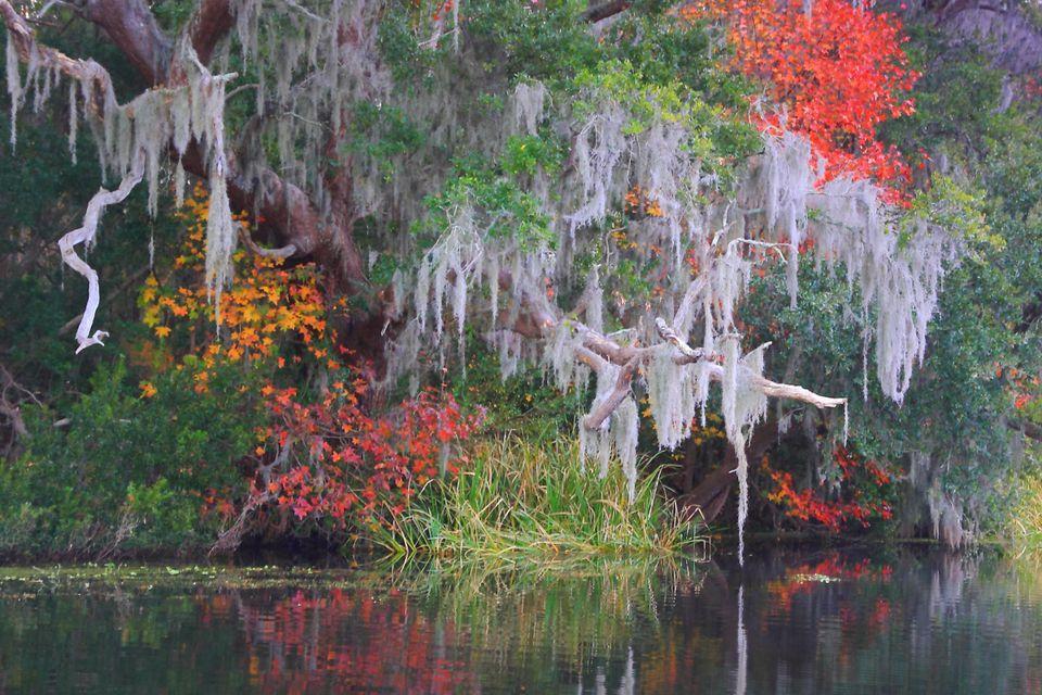 Additional South Carolina Fall Foliage Information