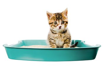 Why Cats Start Peeing Outside Litter Box