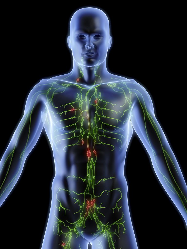 image of the human body with the location of lymph nodes
