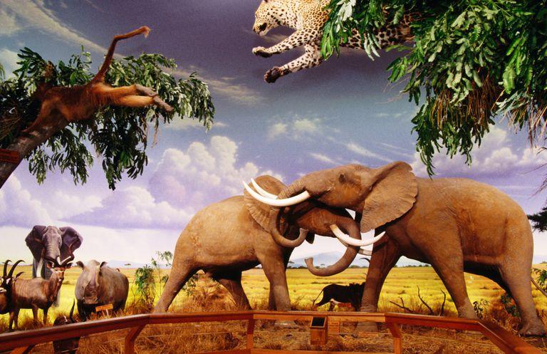 wildlifeexhibitelephant.jpg