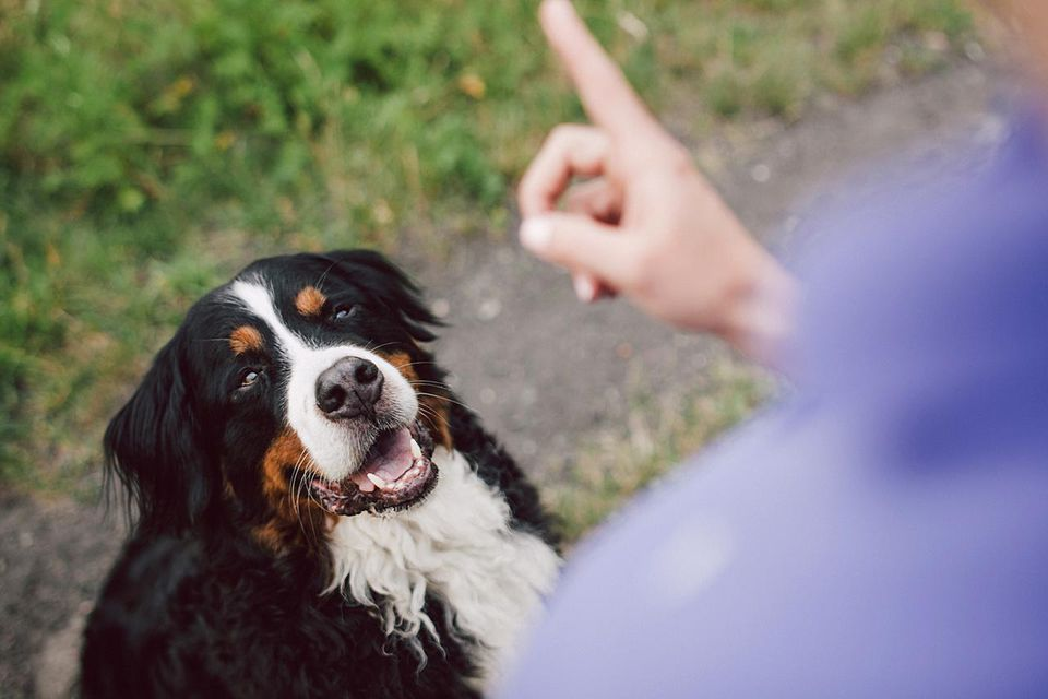 Woman showing warning finger to her dog