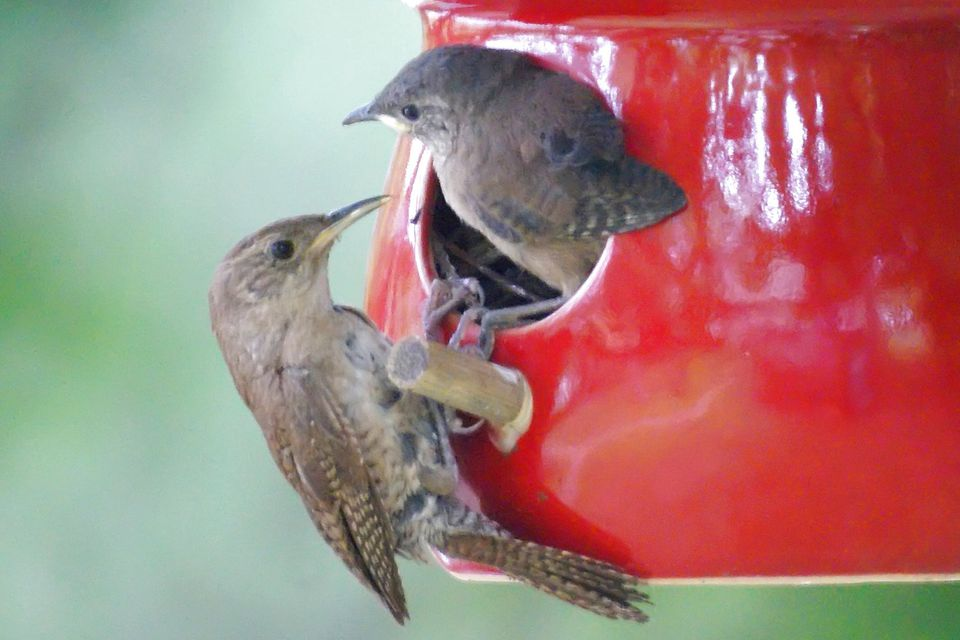 Birds that use birdhouses and how to attract them for Types of birdhouses for birds