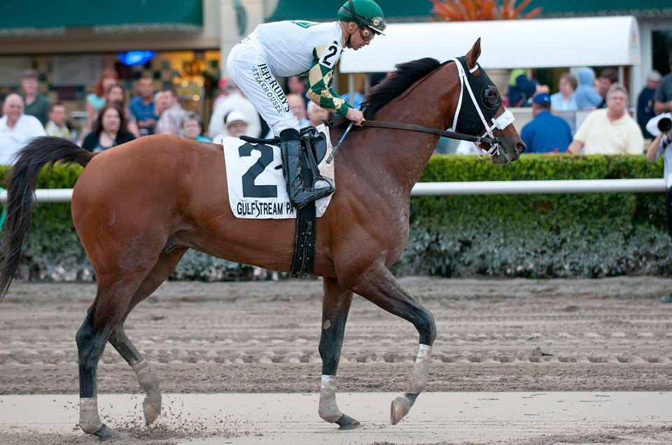Florida Sunshine Millions Horseracing At Gulfstream Park
