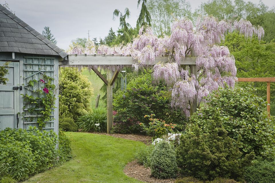 arbor covered with wisteria