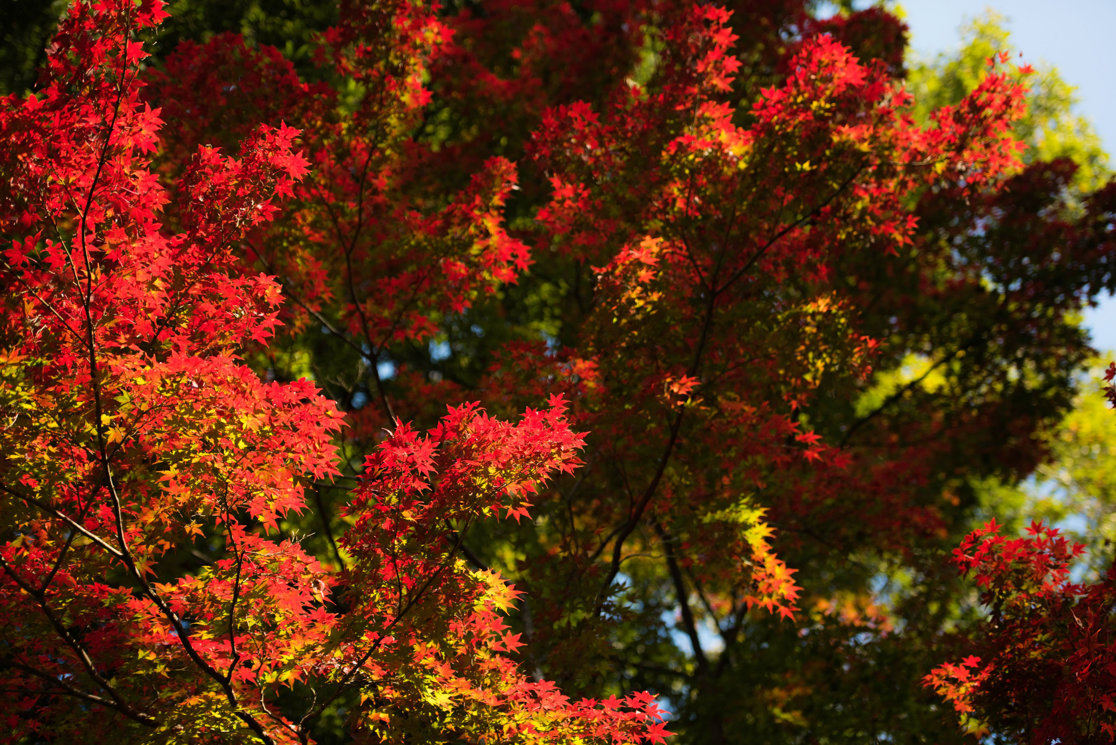 Ten Most Common Trees In The United States