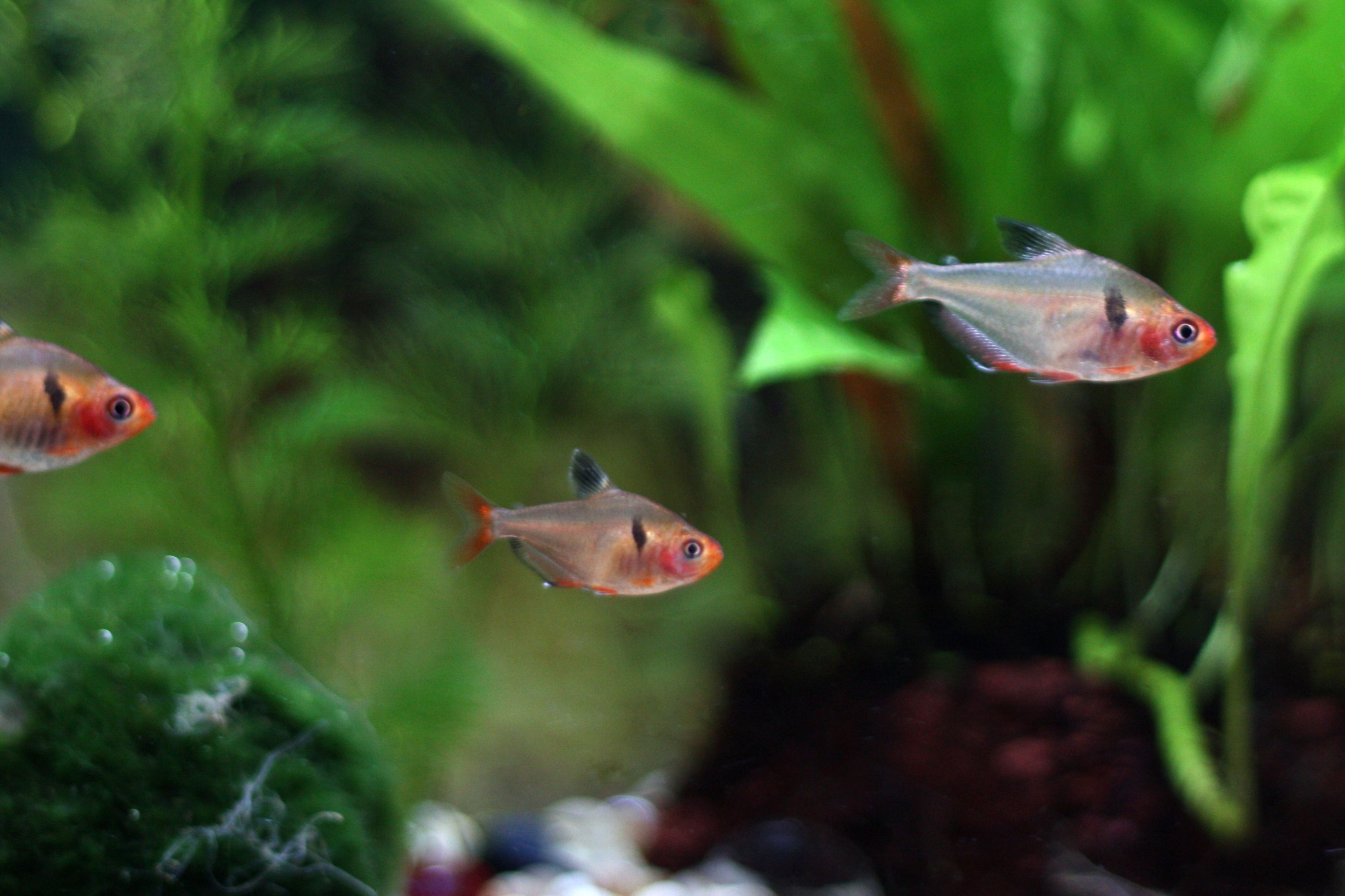 Freshwater aquarium fish information - Common Fish Names Beginning With S Freshwater Aquarium Basics