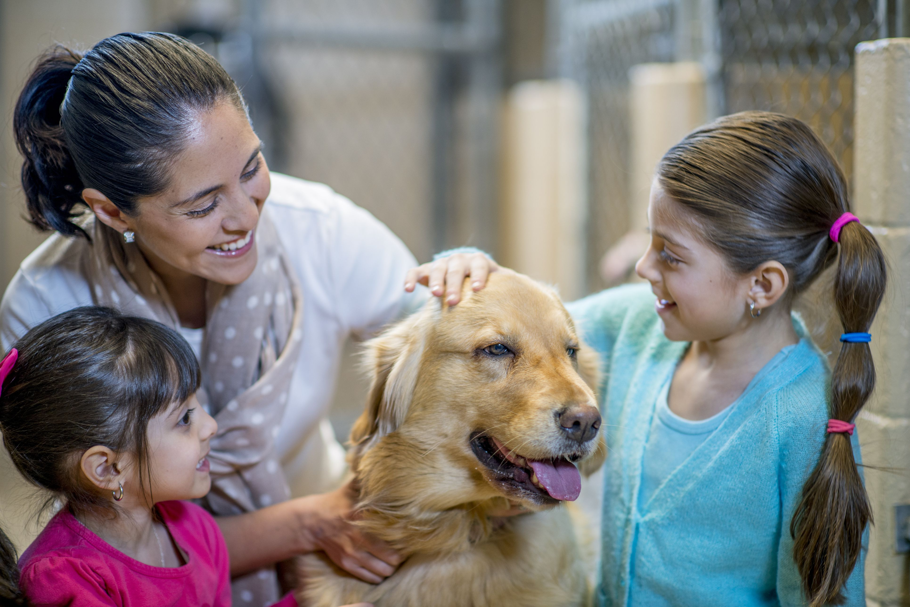 What to Expect After Adopting a New Dog