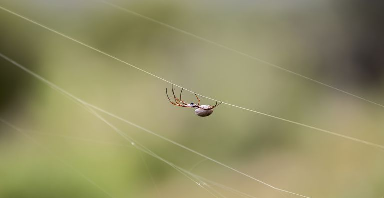 Spider in the West Mac Donnell ranges