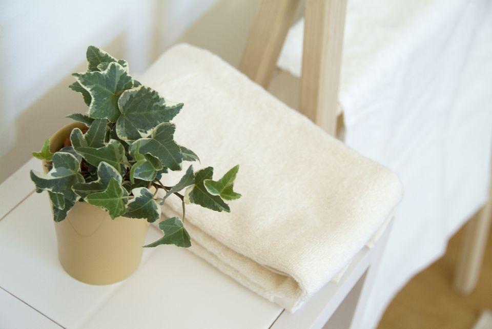 7 Indoor Plants That Are Dangerous To Children Amp Pets