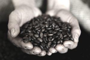 Guatemalan Coffee Beans