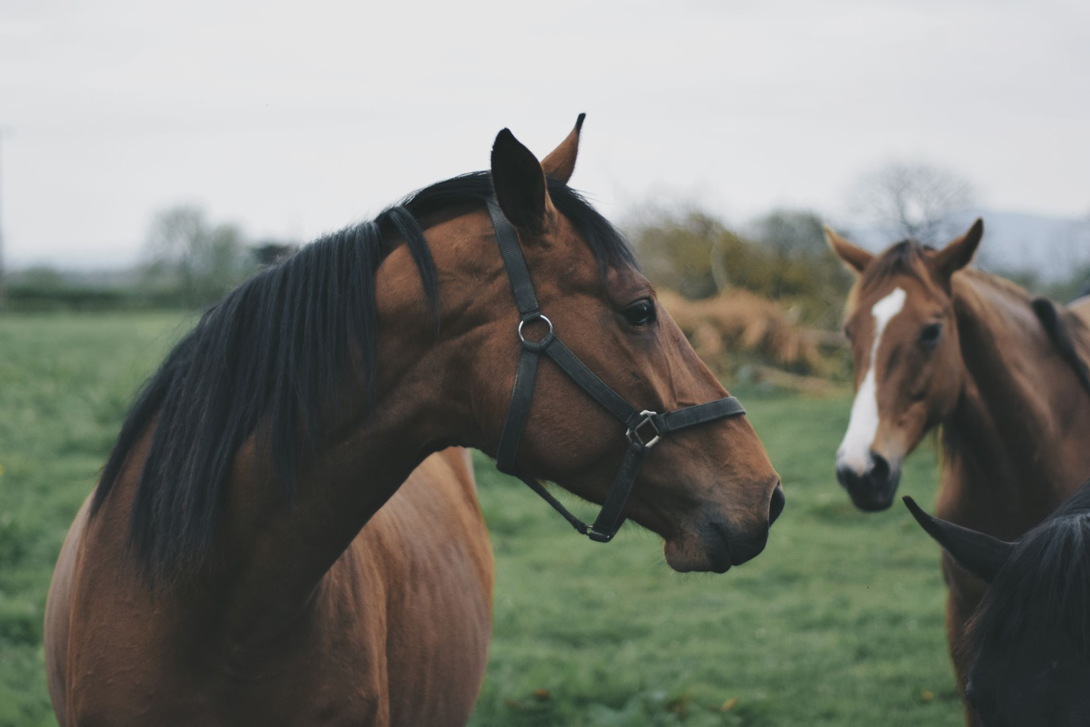 put a bridle on a horse