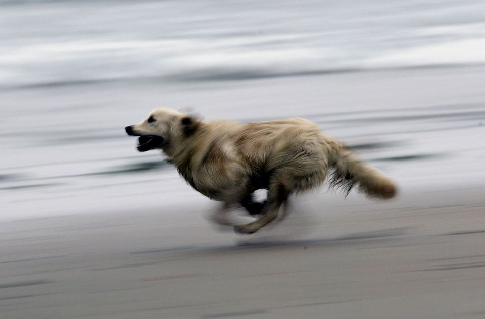 running-dog-DavidMcNew-getty.jpg