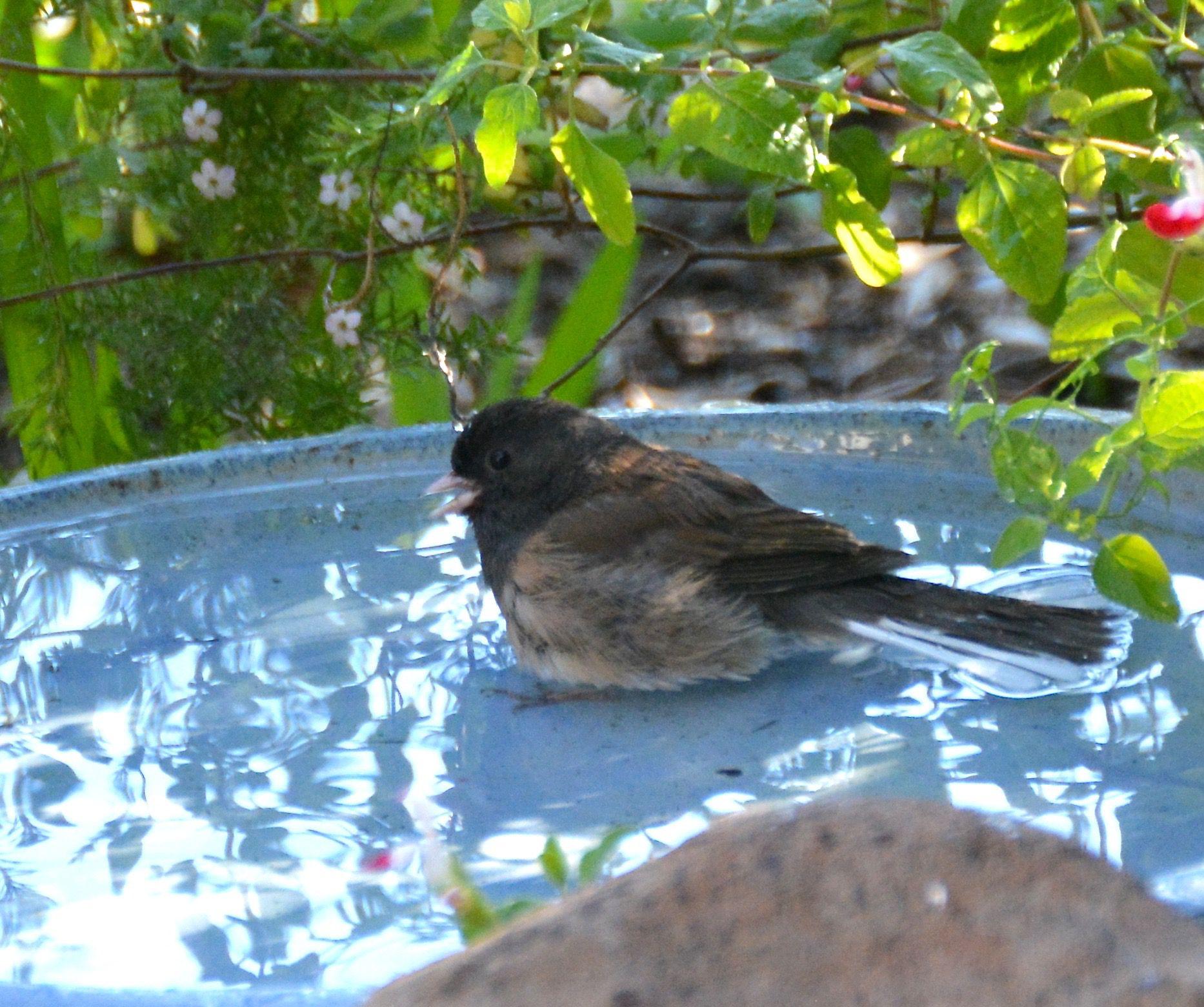 news out a plant balcony diy cerea or with camilla of up your keep patio brighten birds garden california native