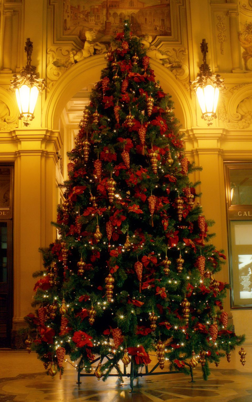 xmas tree indoors long shotjpg - Where To Buy A Christmas Tree