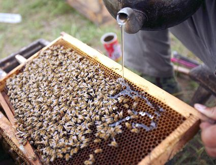 how to start a beehive without buying bees