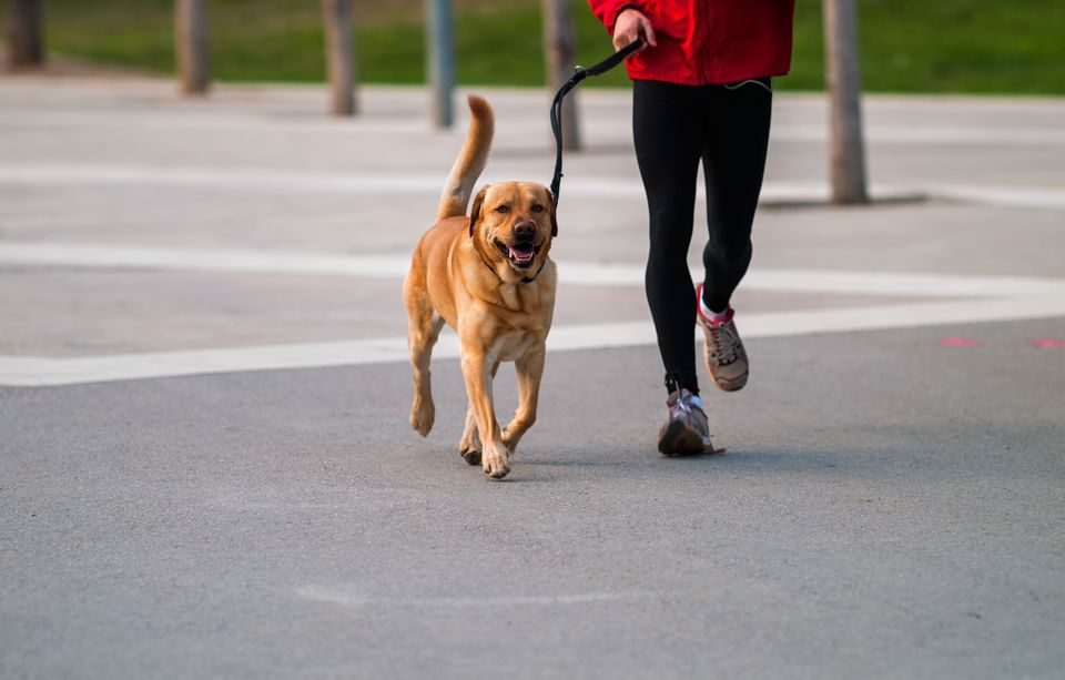 Man jogging with a dog