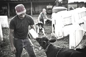 A man feeds a calf with a milk bottle while his brother tends to other calf in their family farm in Keymar, Maryland.