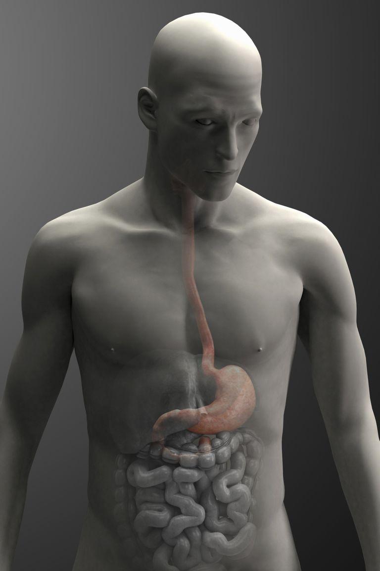 male stomach illustration