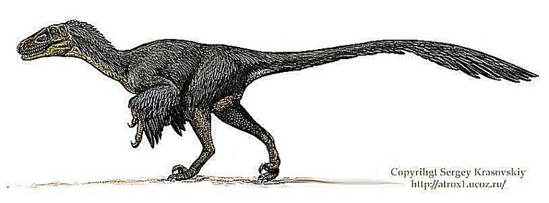 the characteristics of the velociraptor a type of dinosaur The velociraptor is our park's most intelligent dinosaur always on the hunt, they   the velociraptor has curved 6-inch15cm razor-sharp claws on each hand.