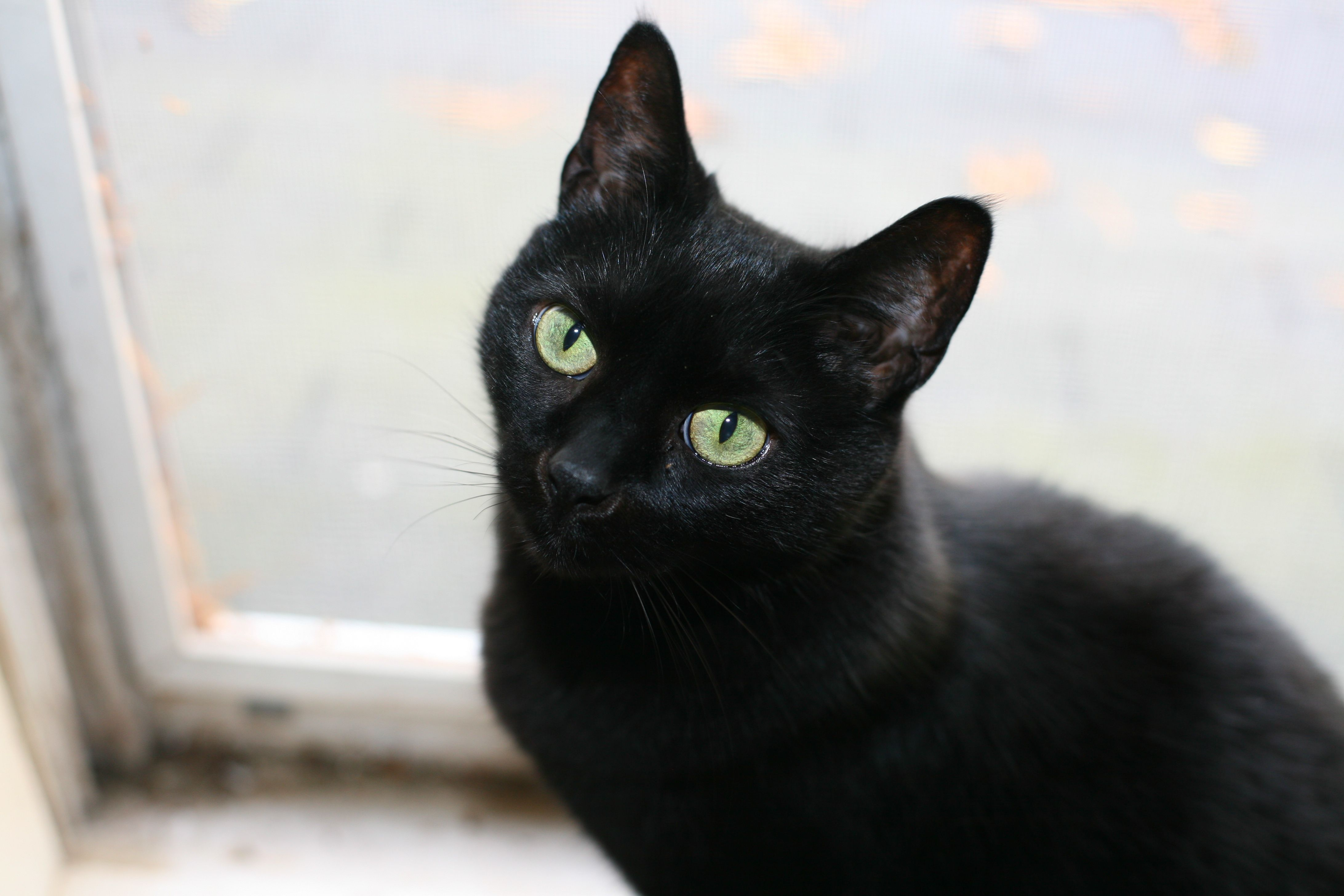 Motives for Murder in Edgar Allan Poe s The Black Cat