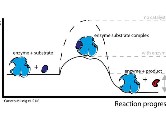 enzyme action illustration