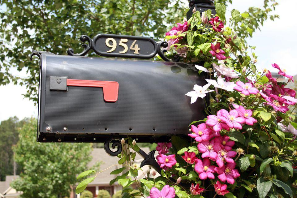 Clematis on Mailbox
