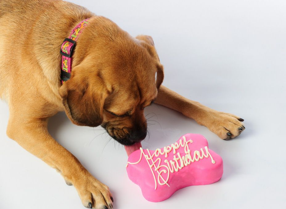 Photo of Dog Birthday Cake