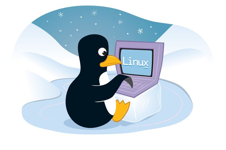 Penguin Using a Laptop Computer