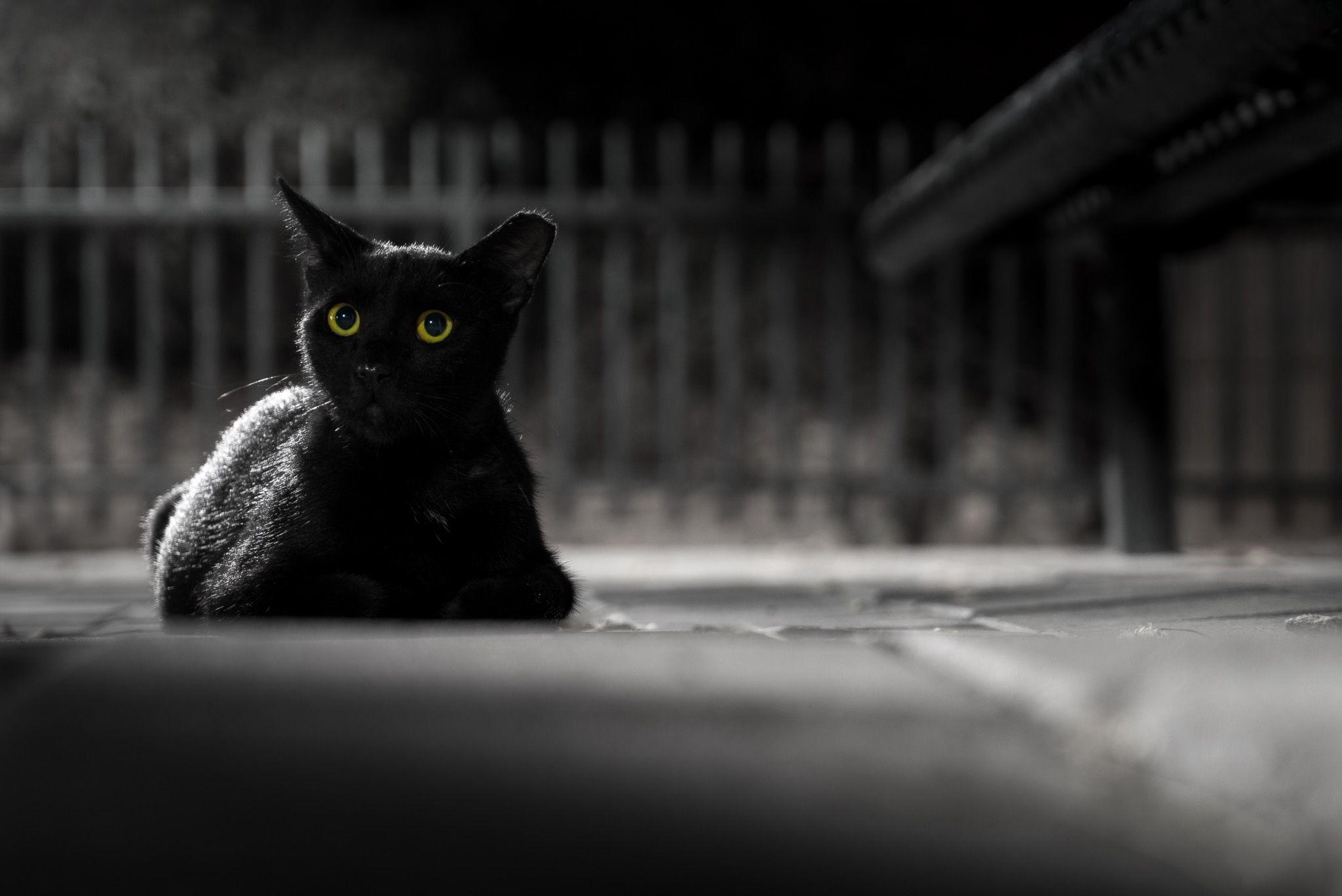 Unreliable Narrator In The Black Cat