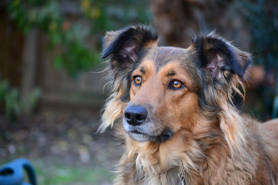 Can Heartworms Cause Seizures In Dogs