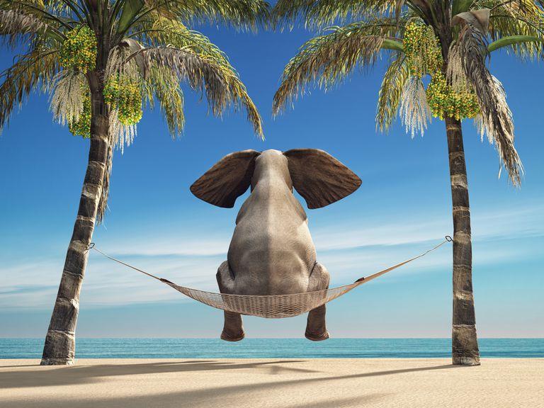 Elefante en hamaca