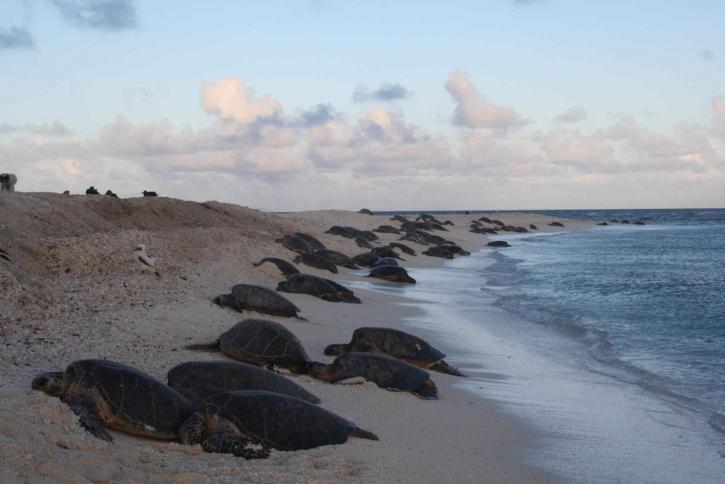 Sea-Turtles.jpg