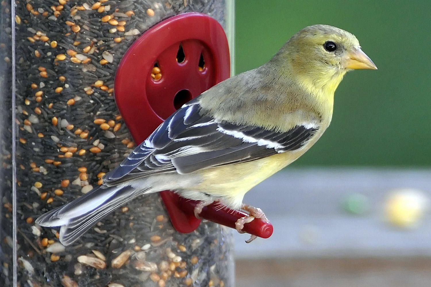 granivorous definition seed eating birds