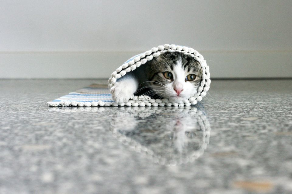 Cat rolled up in carpet