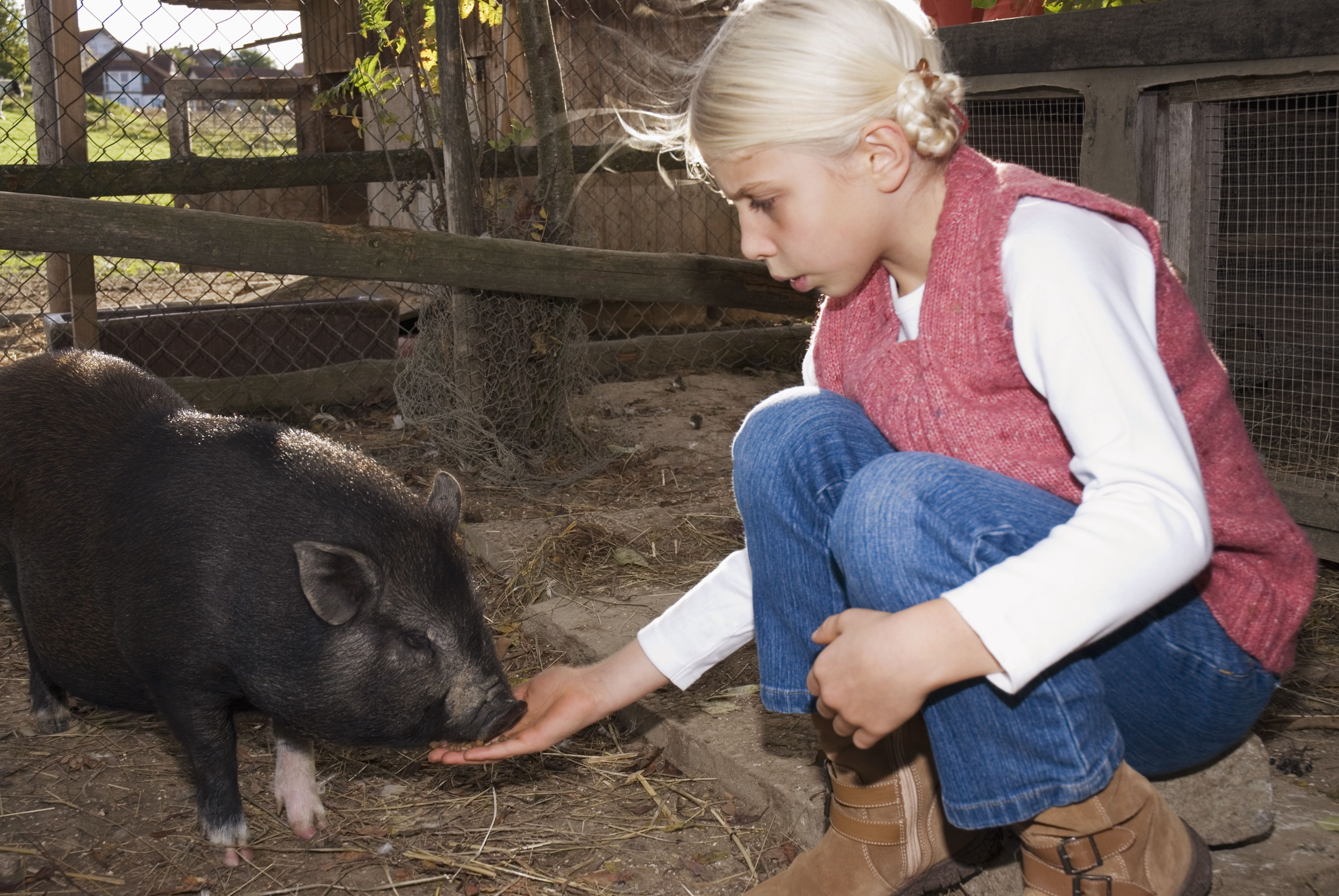 Names For Pet Pot Bellied Pigs