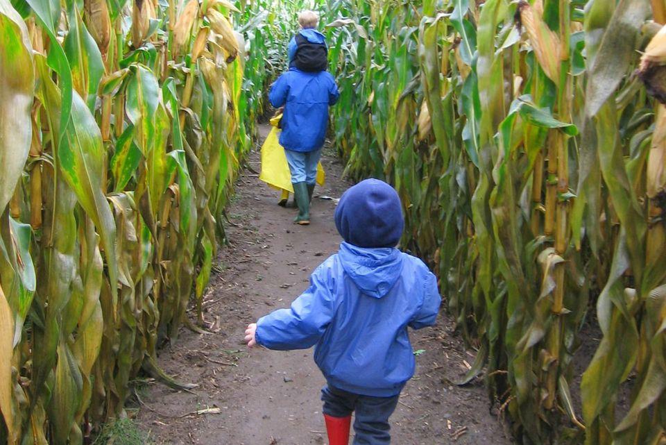 Great Vermont Corn Maze