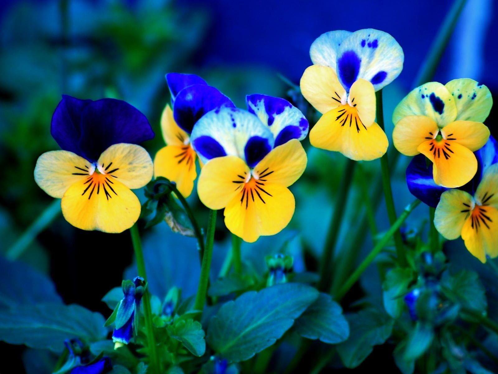 22 beautiful free spring wallpapers to bring you joy