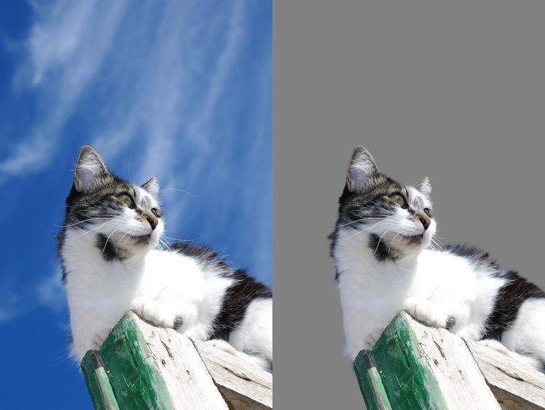 The Refine Edge Tool in Photoshop