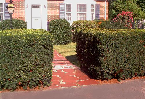 "The opening in the hedge functions as a ""gate"" onto the property."