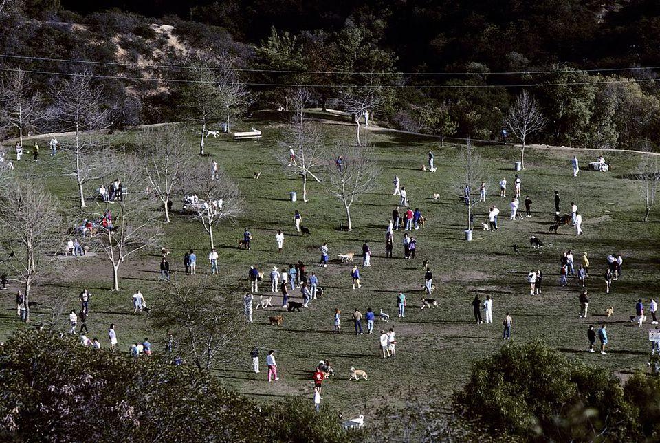 Mulholland Dog Park, Laurel Canyon