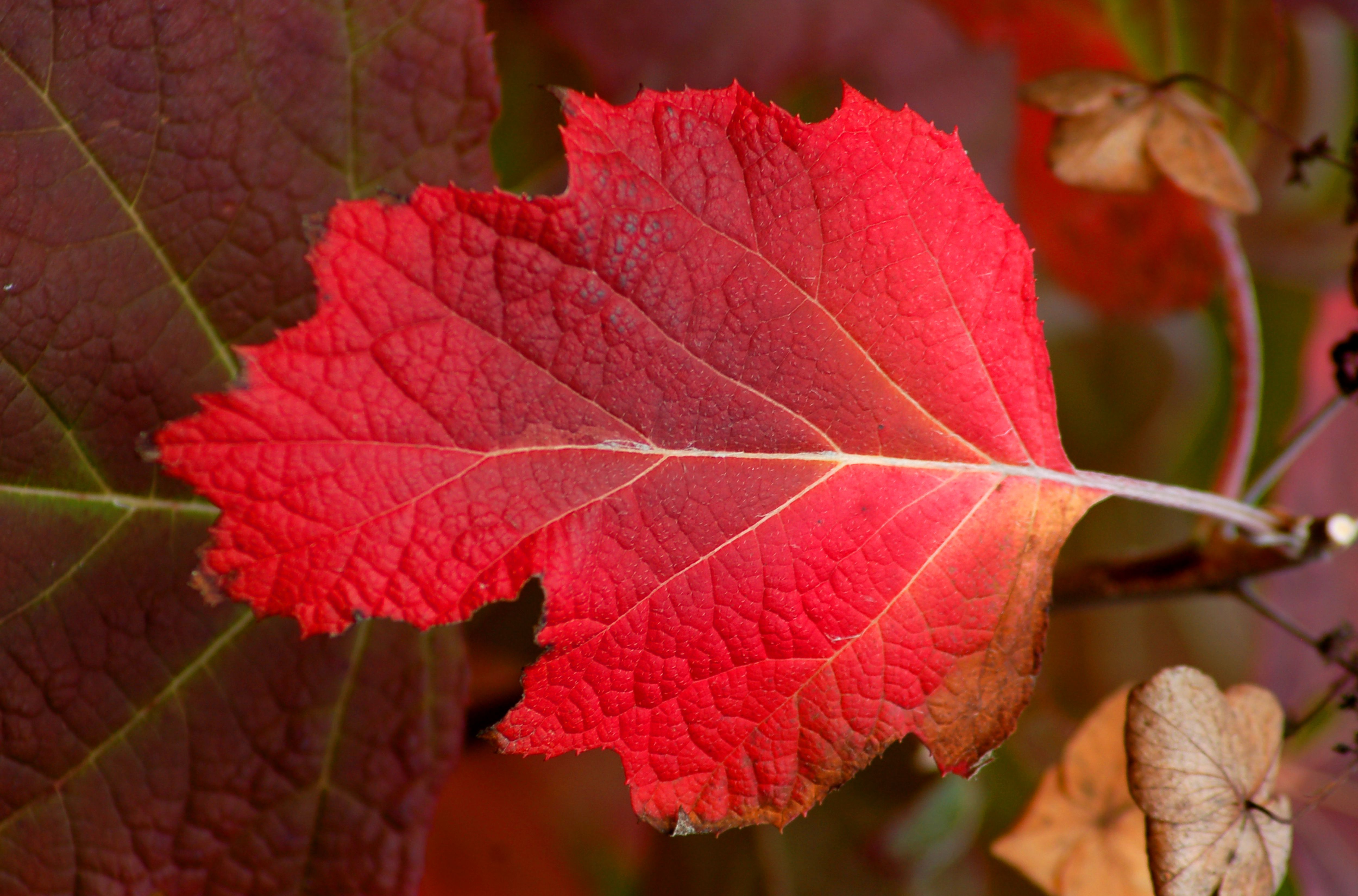identify poison ivy with these photos