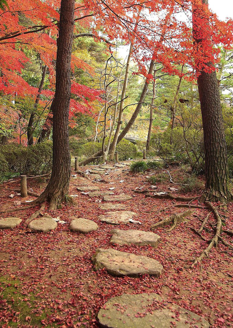 Stone pathway in the japanese like garden. A red maple tree in the autumn colors left its leaves on the crossroads.