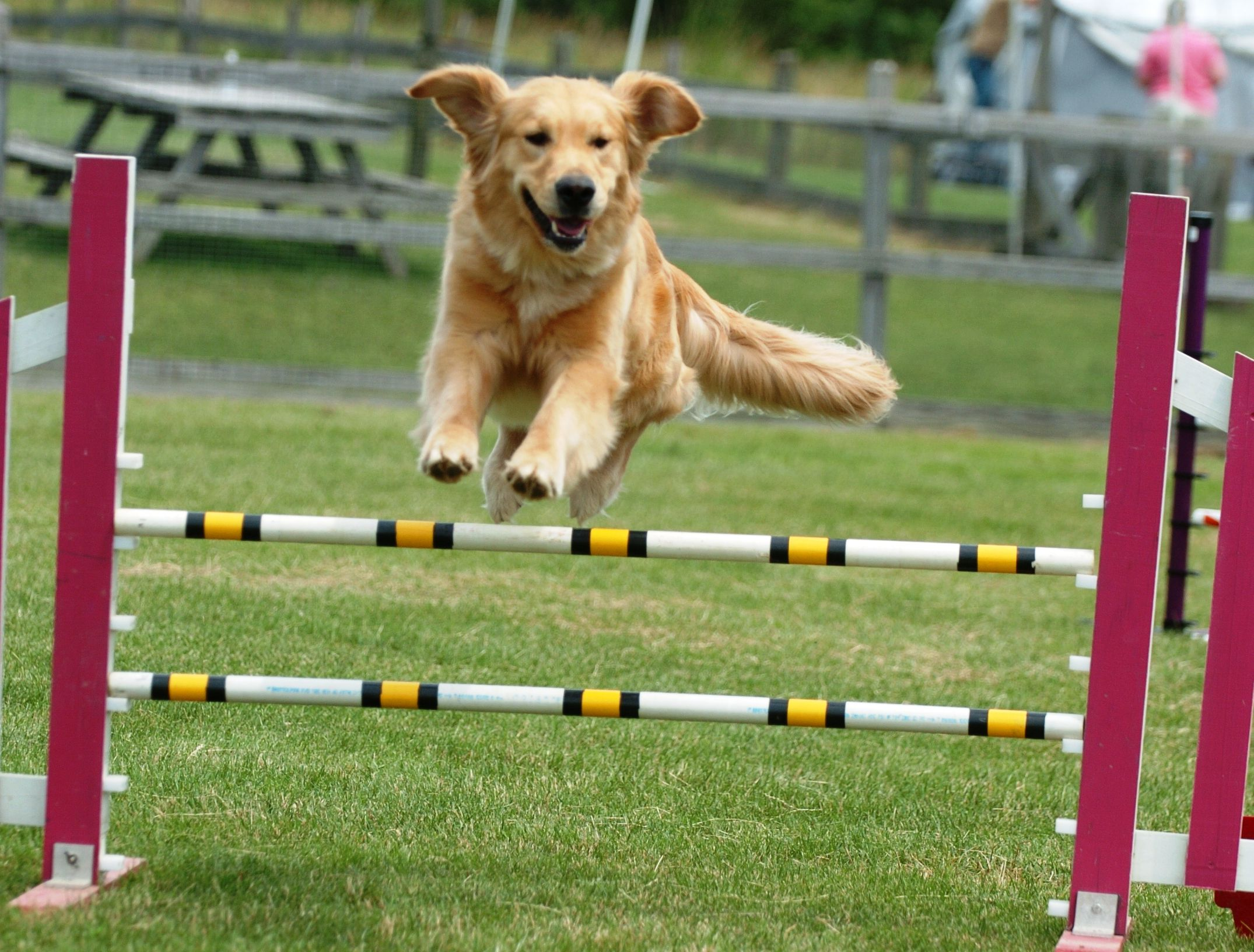 Top 10 Sports And Activities For Dogs